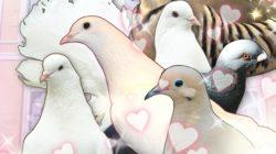 Hatoful Boyfriend – Recensione