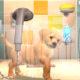 Annunciato PlayStation Vita Pets!