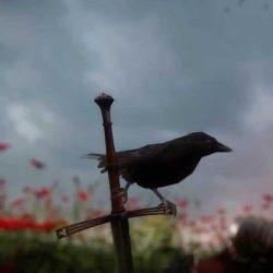Warhorse annuncia l'RPG medioevale Kingdom Come: Deliverance