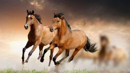 Horse Haven World Adventures è disponibile per smartphone e tablet