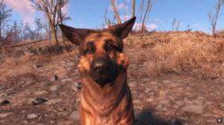 Fallout 4, conosciamo meglio Dogmeat