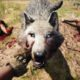 Far Cry Primal, il brutale trailer 101