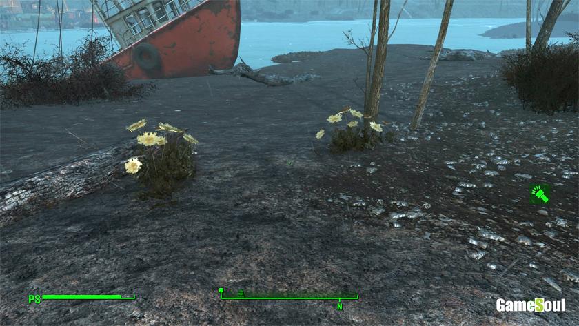Fallout 4: Guida a Beverone - Fiore di carota