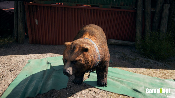 Far Cry 5 - Dove trovare l'orso Cheesburger
