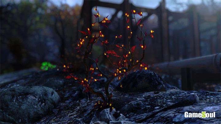 Fallout 76 - Dove trovare Bacca Lunare | Guida