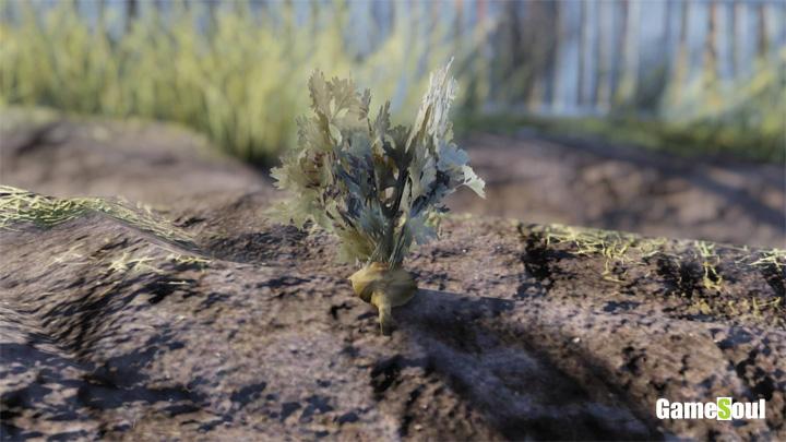 Fallout 76 - Dove trovare le carote | Guida