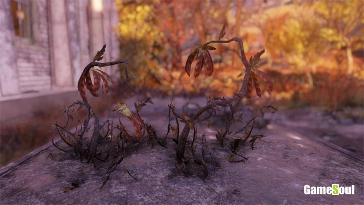 Fallout 76 - Dove trovare Fagiolo di Sabbia   Guida
