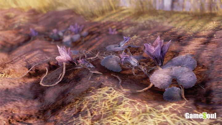 Fallout 76 - Dove trovare i fiori o boccioli di cocomero   Guida