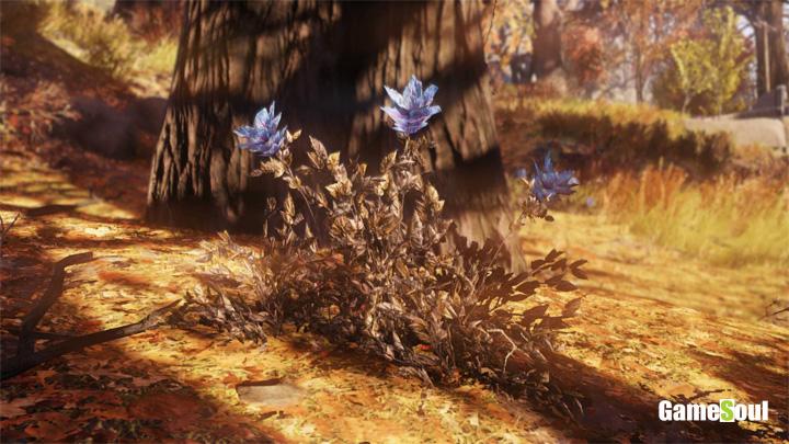 Fallout 76 - Dove trovare Fiore della Fuliggine   Guida