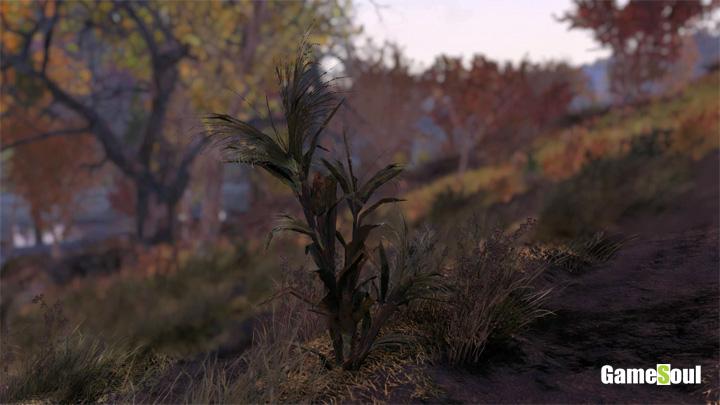 Fallout 76 - Dove trovare Granturco | Guida