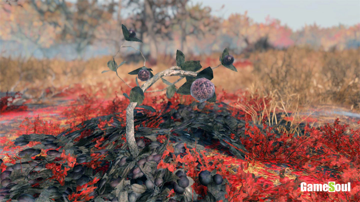 Fallout 76 - Dove trovare Mirtillo   Guida