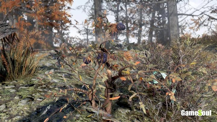 Fallout 76 - Dove trovare Mora | Guida