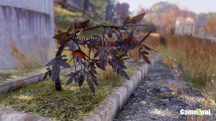 Fallout 76 - Dove trovare Rosa Cinerea   Guida